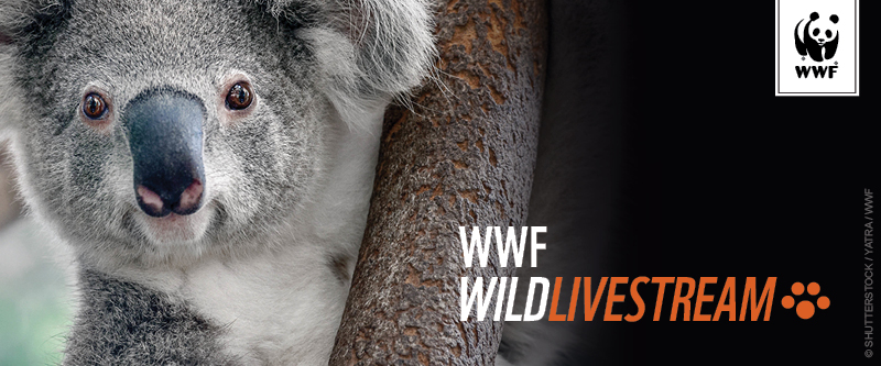 World Wildlife Fund Livestream